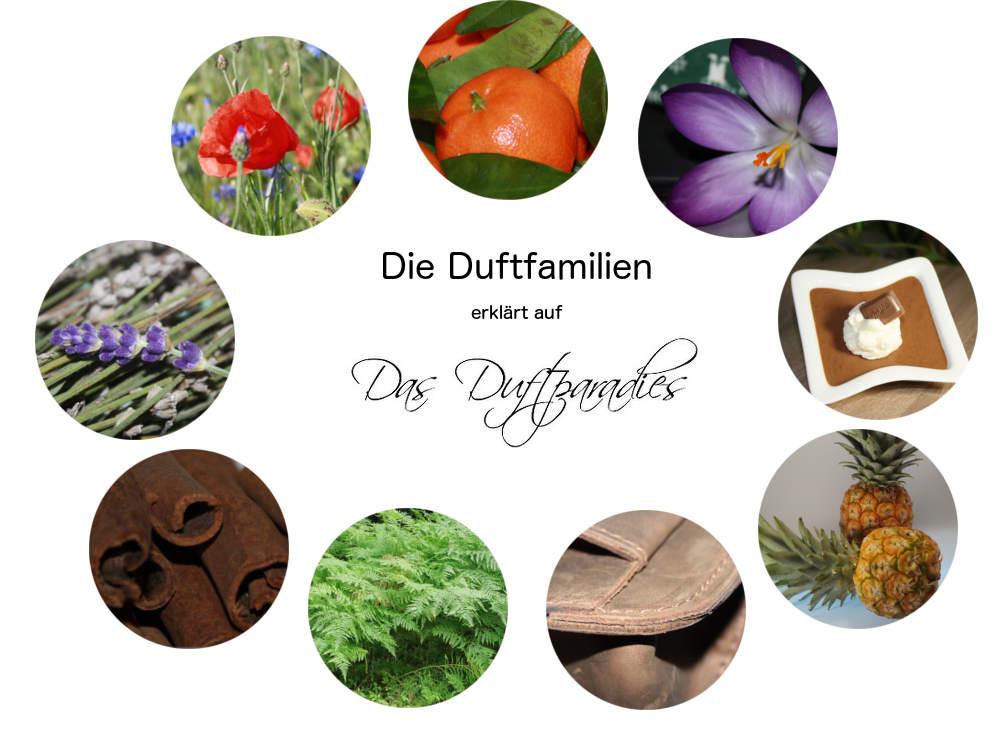 Duftfamilien erklärt auf Das-Duftparadies.de