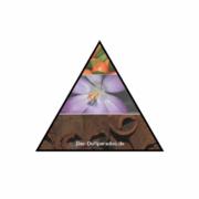 Aufbau Duftpyramide bei Parfüm