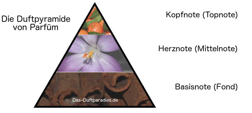 Duftpyramide Parfüm aufgeteilt in Kopf, Herz und Basis