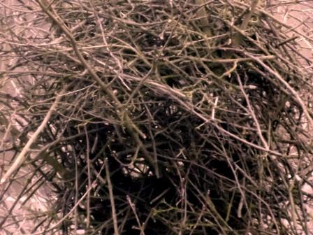 warme Holznote bei Sandelholz