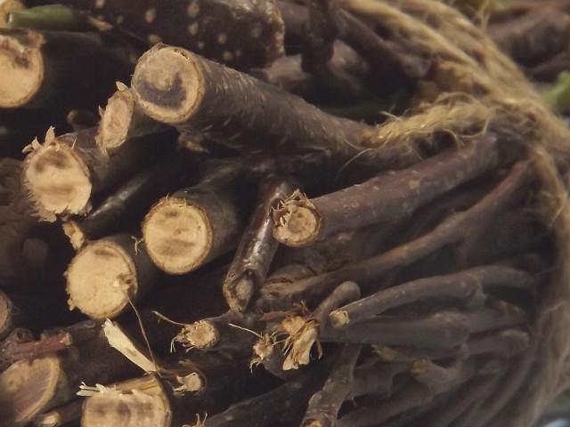 Holzige Düfte