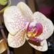Methoden der Duftgewinnung aus Blüten