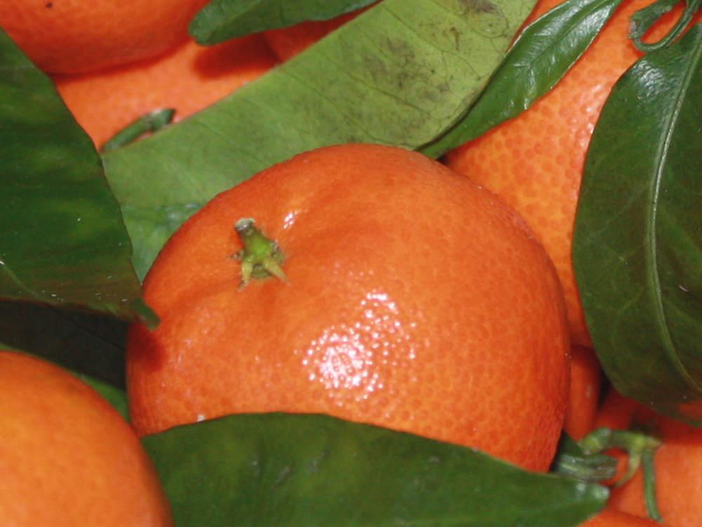 Mandarinen als Duftnote in Parfüm